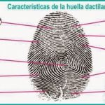 LAS CARACTERÍSTICAS DE LAS HUELLAS DACTILARES
