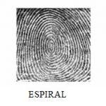 Dactiloscopia TIPOS DE DACTILOGRAMA